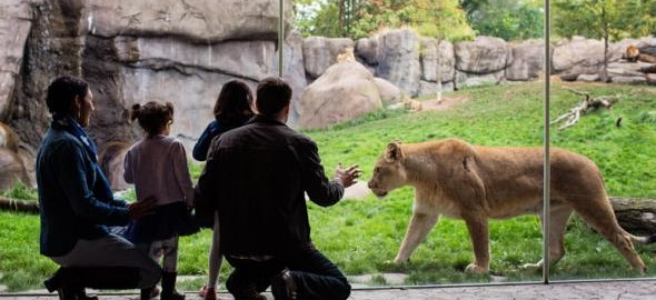 H_lion-family-kids-visitors