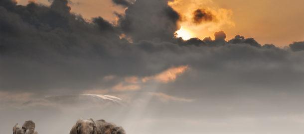 mining-no-longer-top-sector-attracting-investors-africa-report