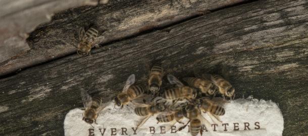 Bee Saving Paper Card