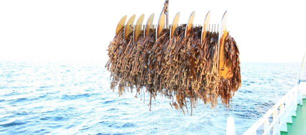 fot. DuPont_norway_seaweed